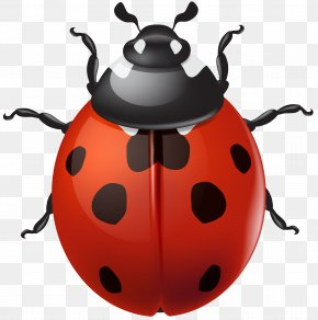 Drawing Ladybird Beetle Image Tutorial Clip Art, PNG.