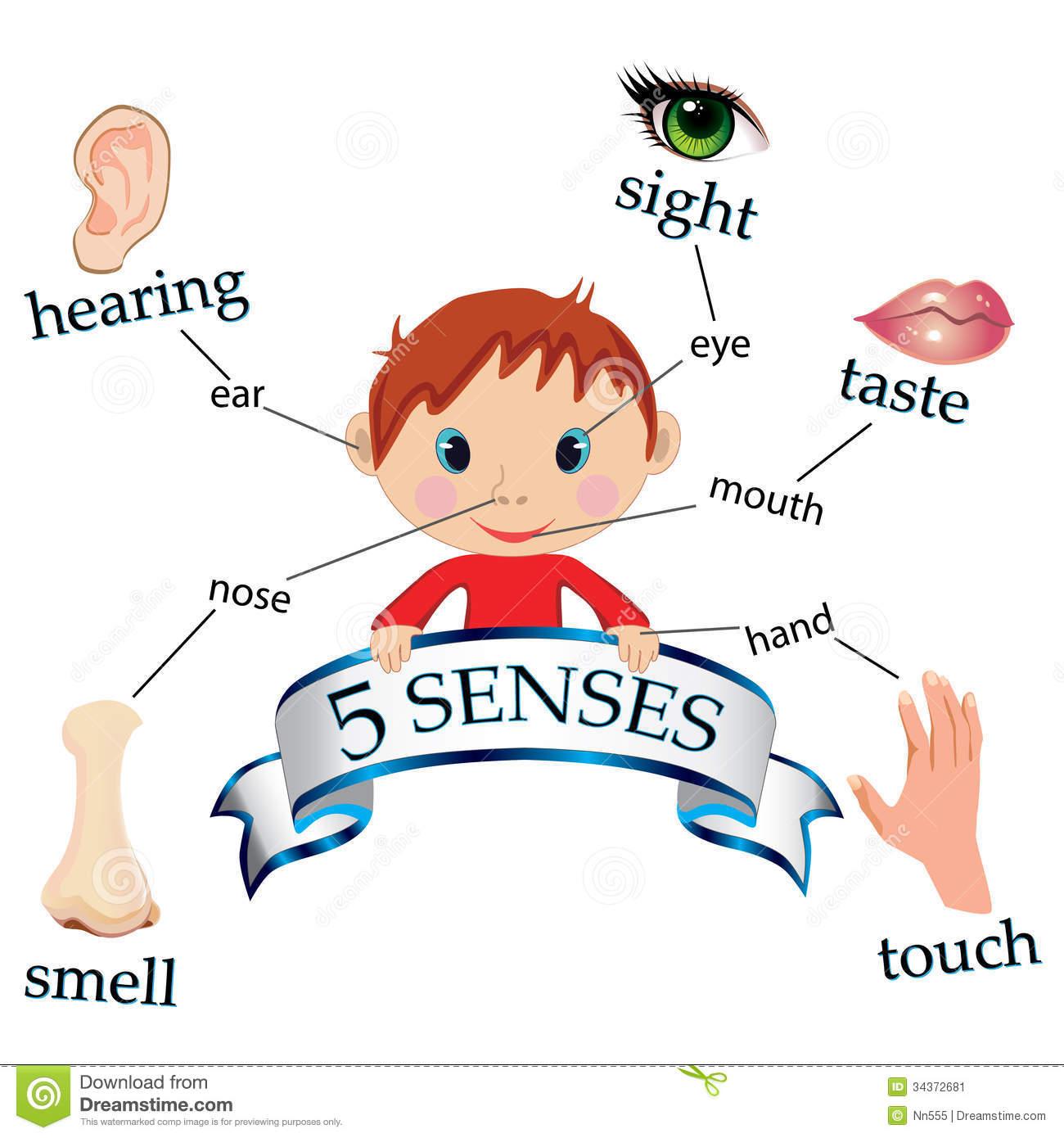 83+ 5 Senses Clipart.