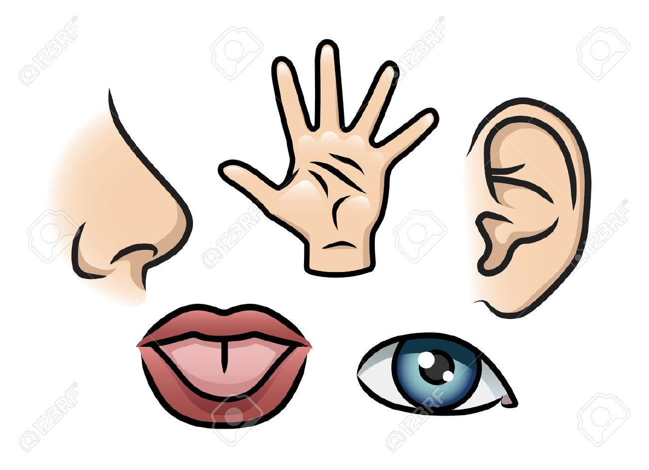 A cartoon illustration depicting the 5 senses Smell, touch,...