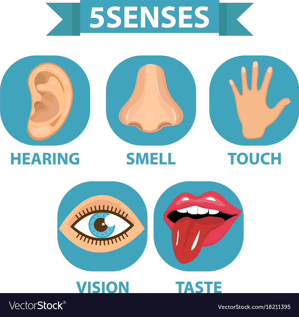 5 senses icon set touch smell hearing vision.