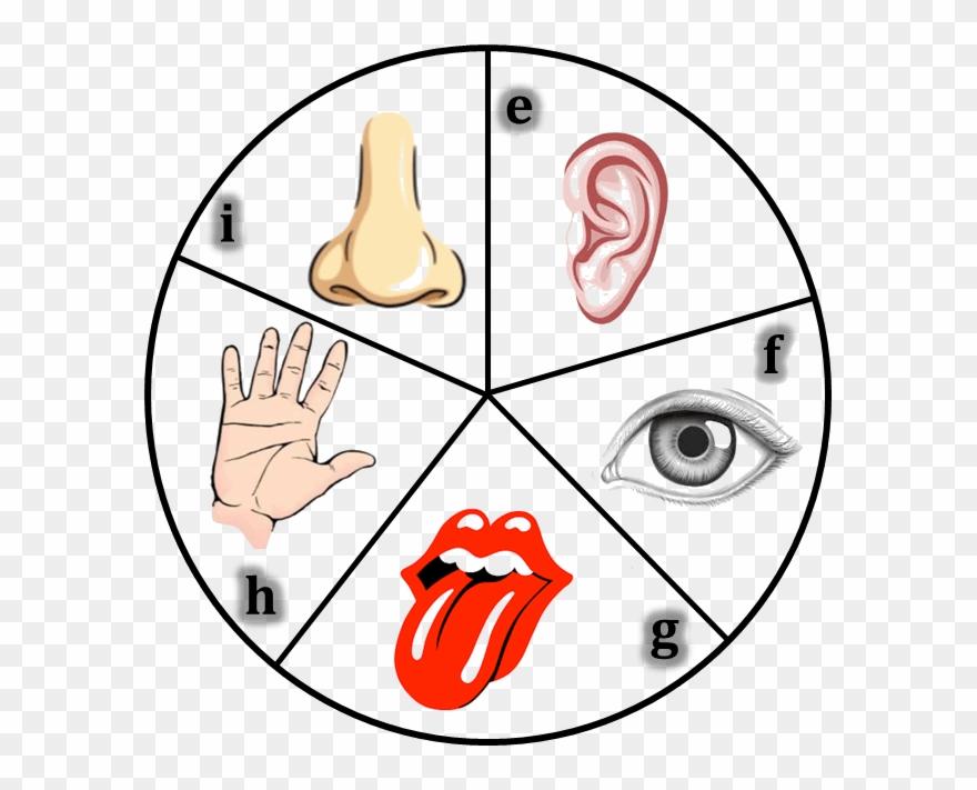 Sensory Dermatomes Of The Human Body.