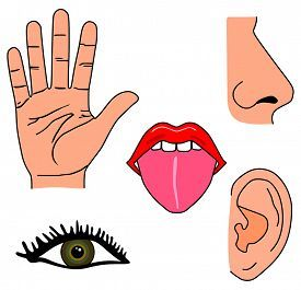 Image result for my five senses clipart.