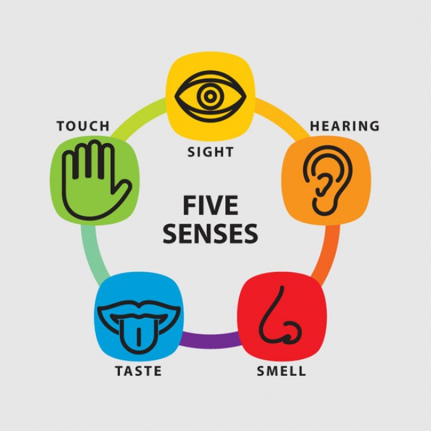 Free 5 Senses Cliparts, Download Free Clip Art, Free Clip Art on.