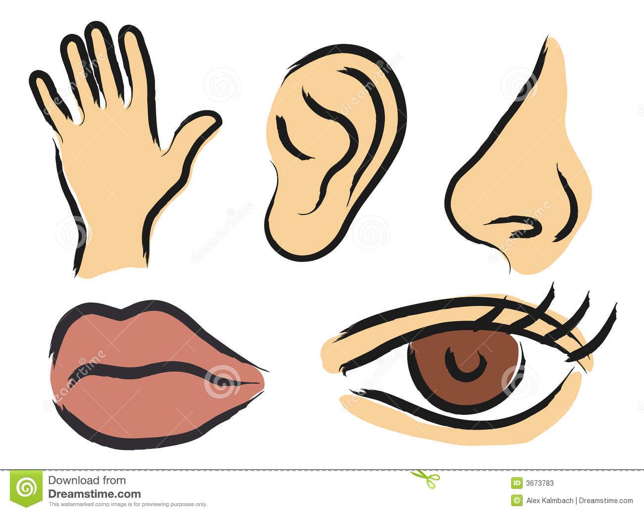 5 senses clipart sense organ, 5 senses sense organ.