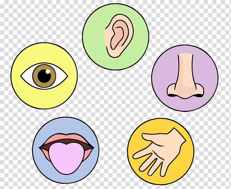 The Five Senses World Child Understanding, organ transparent.