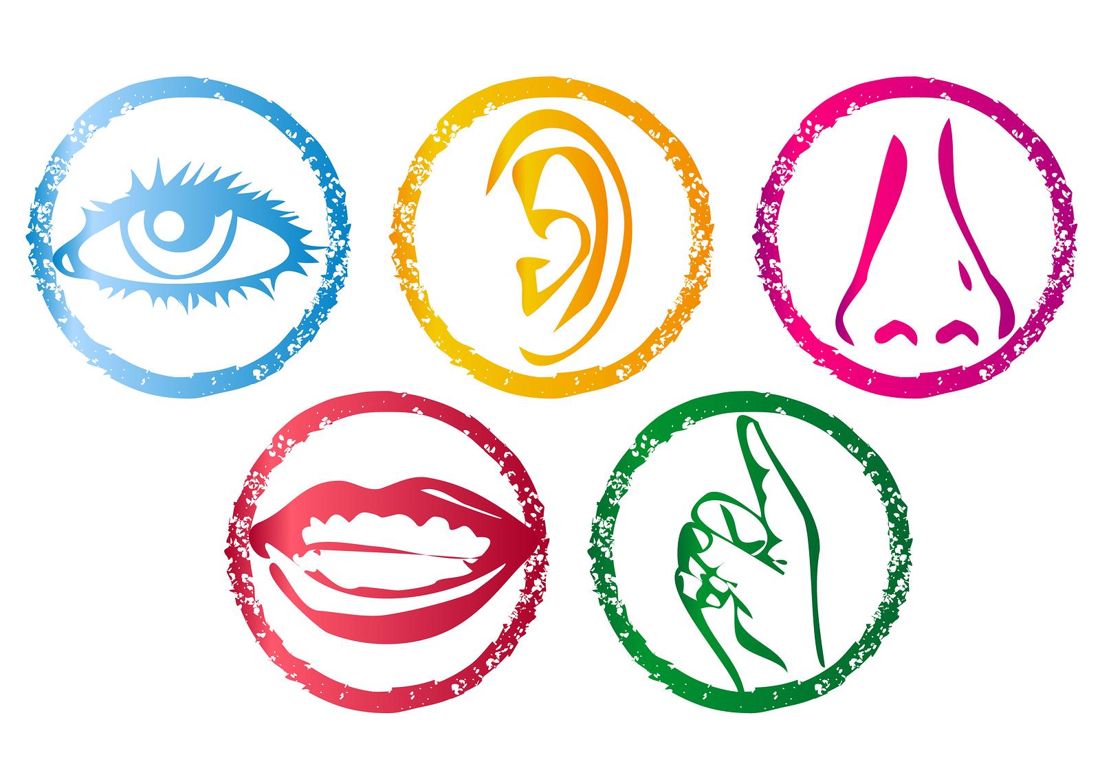 Free 5 Senses Cliparts, Download Free Clip Art, Free Clip.