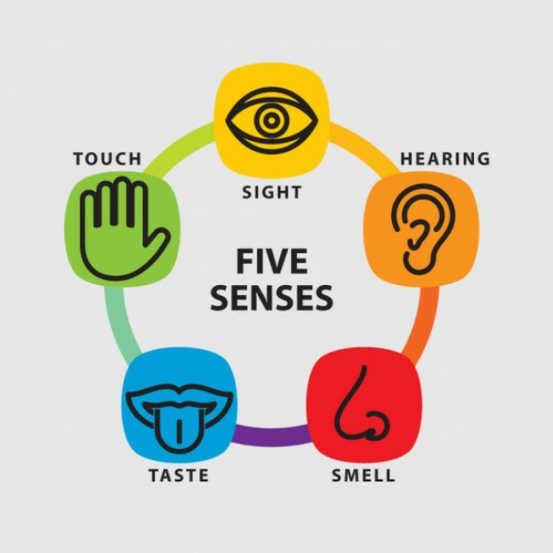 5 Senses Png & Free 5 Senses.png Transparent Images #10230.