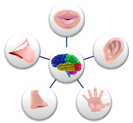 How Much Do Your 5 Senses Affect Your Day?.