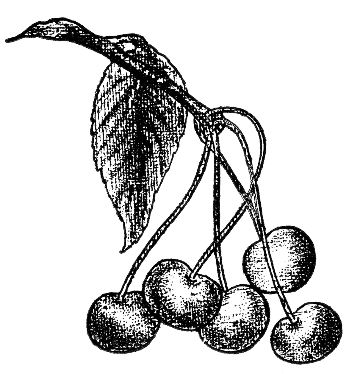 Free Vintage Cherry Cliparts, Download Free Clip Art, Free.