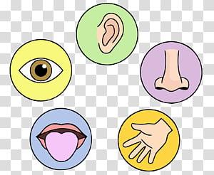 Five Senses transparent background PNG cliparts free.