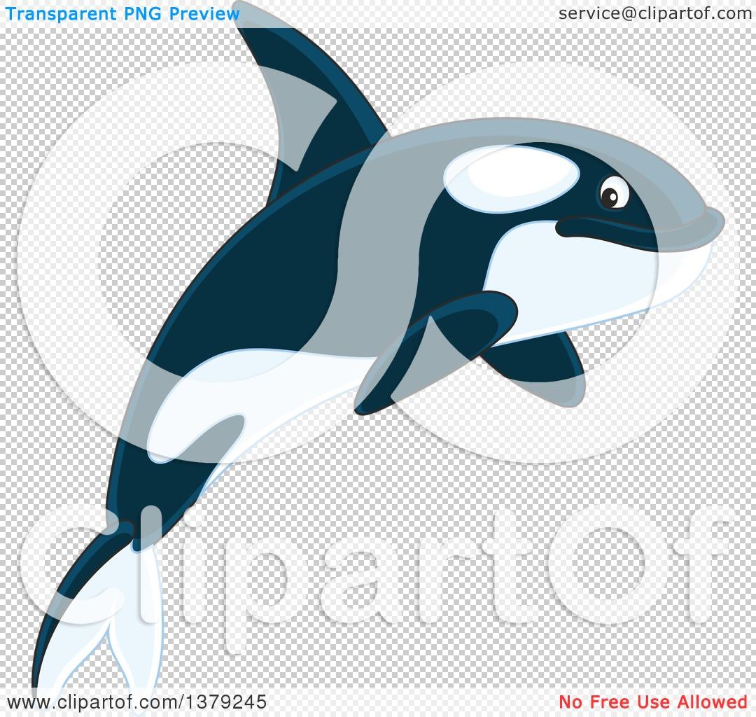 orca clipart #63.