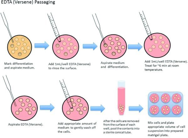 Comet Assay and Cell Cultures.