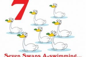 7 swans a swimming clipart 6 » Clipart Portal.