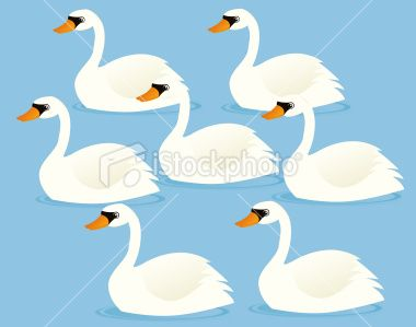 A vector illustration of seven swans a.