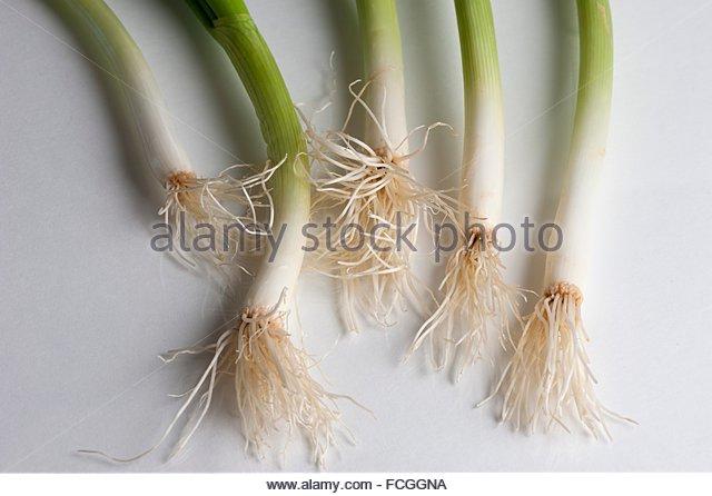 Welsh Onion Allium Fistulosum Stock Photos & Welsh Onion Allium.