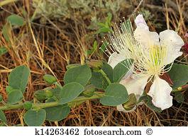 Wild mountain vegetables Stock Photo Images. 173 wild mountain.