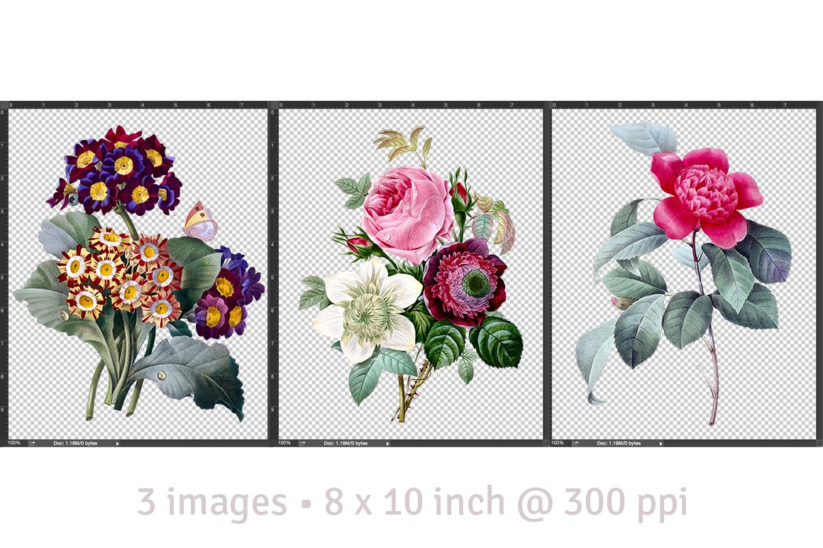 Camellia • Rose • Auricula • Flowers 12 • Bundle by Enliven.