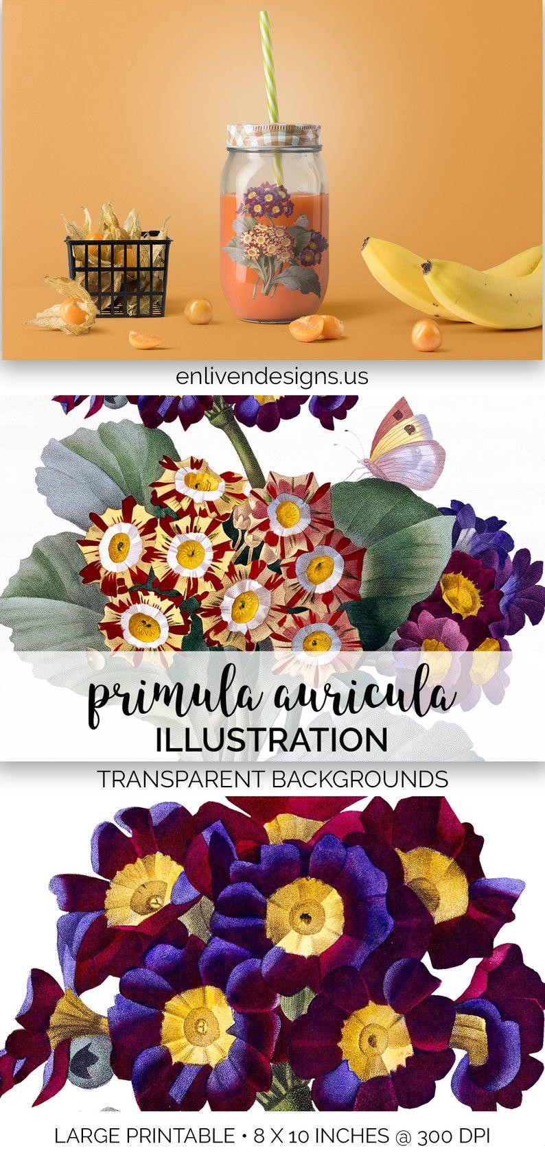 Primula Auricula Flower Bouquet Clip Art Printable Art.