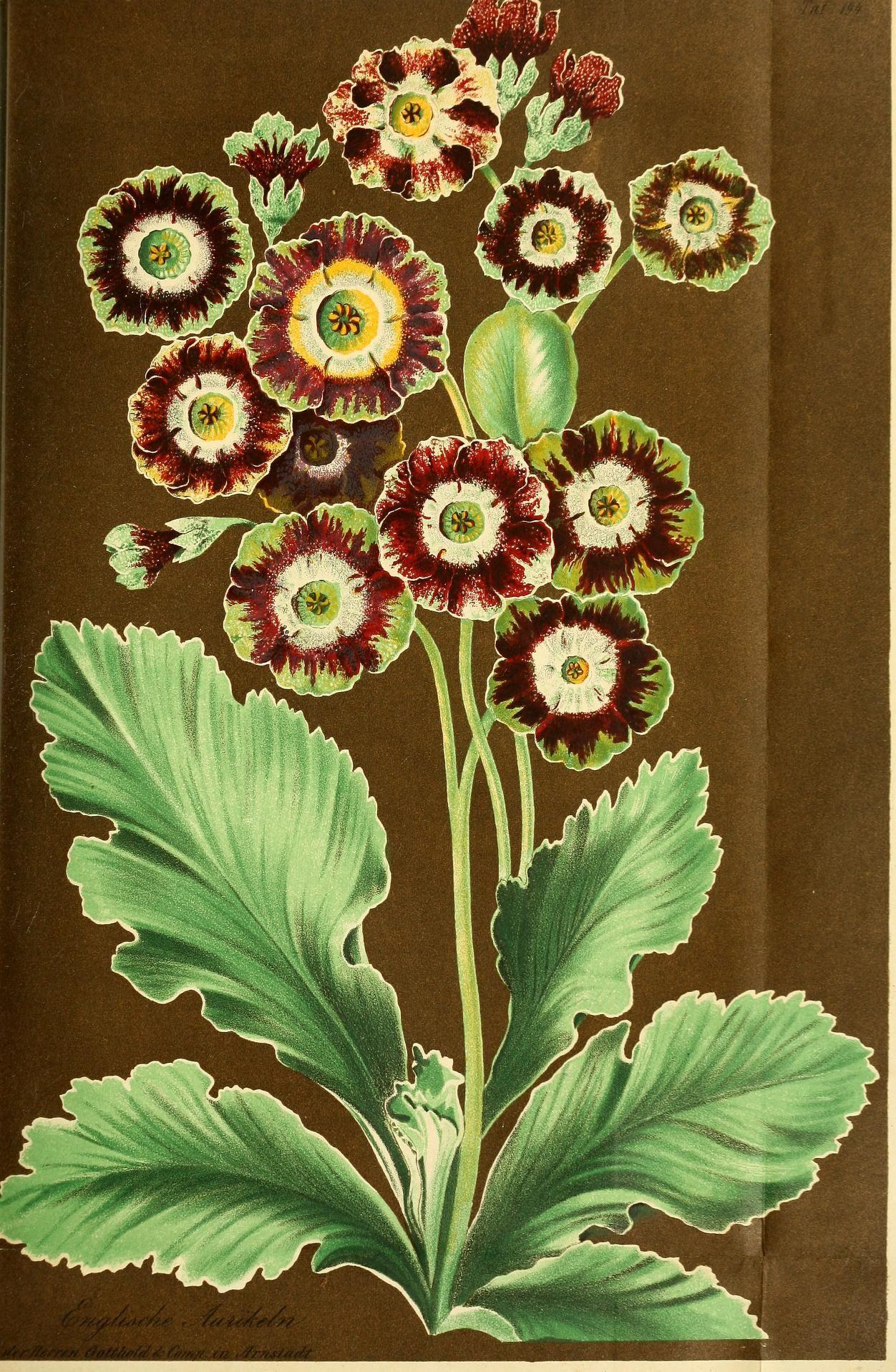 Bd.6(1857).