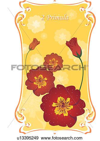 Stock Illustration of auricula, primula, oxlip, primrose, flower.