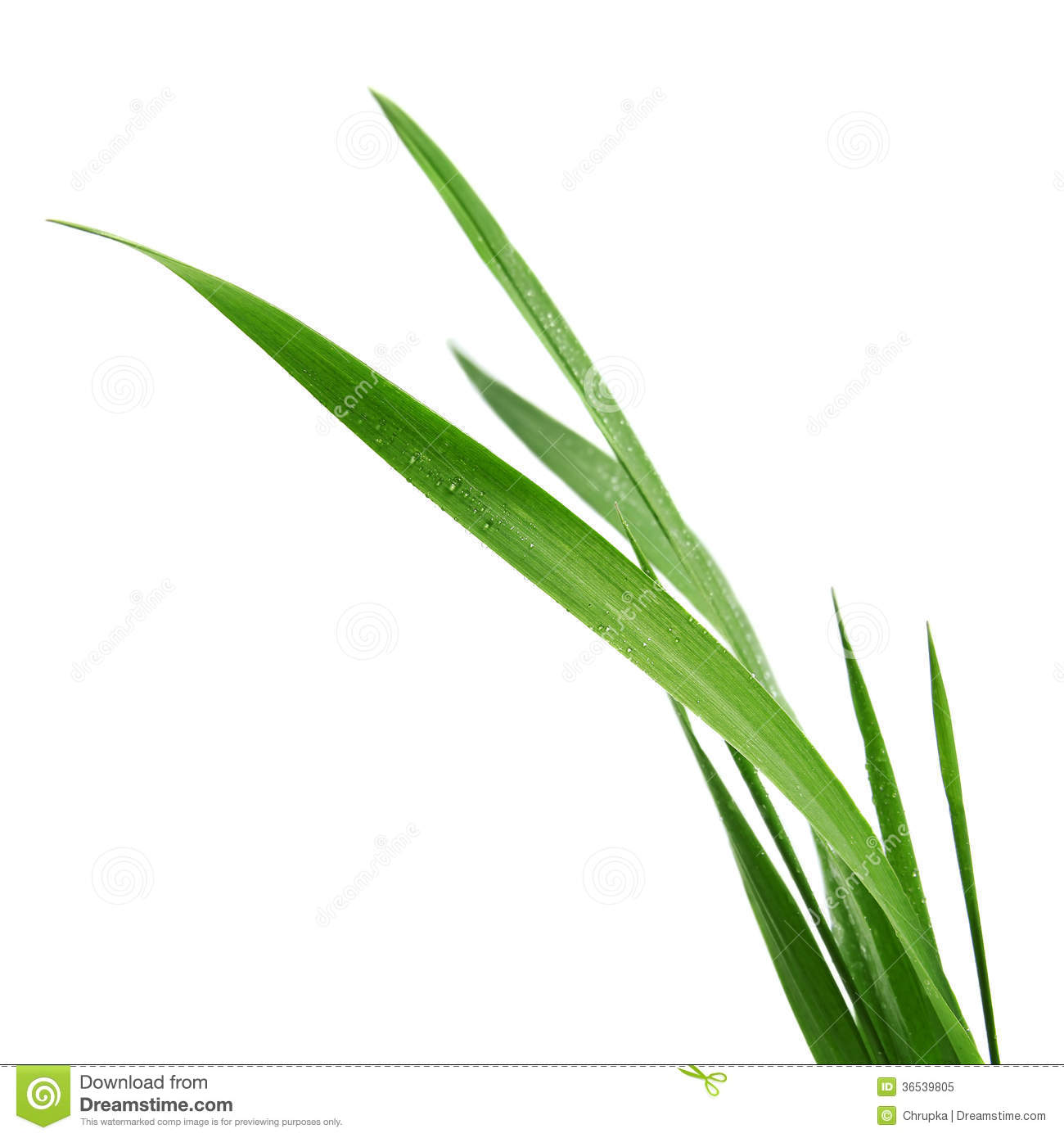 Blade Of Grass Isolated On White Stock Illustration.