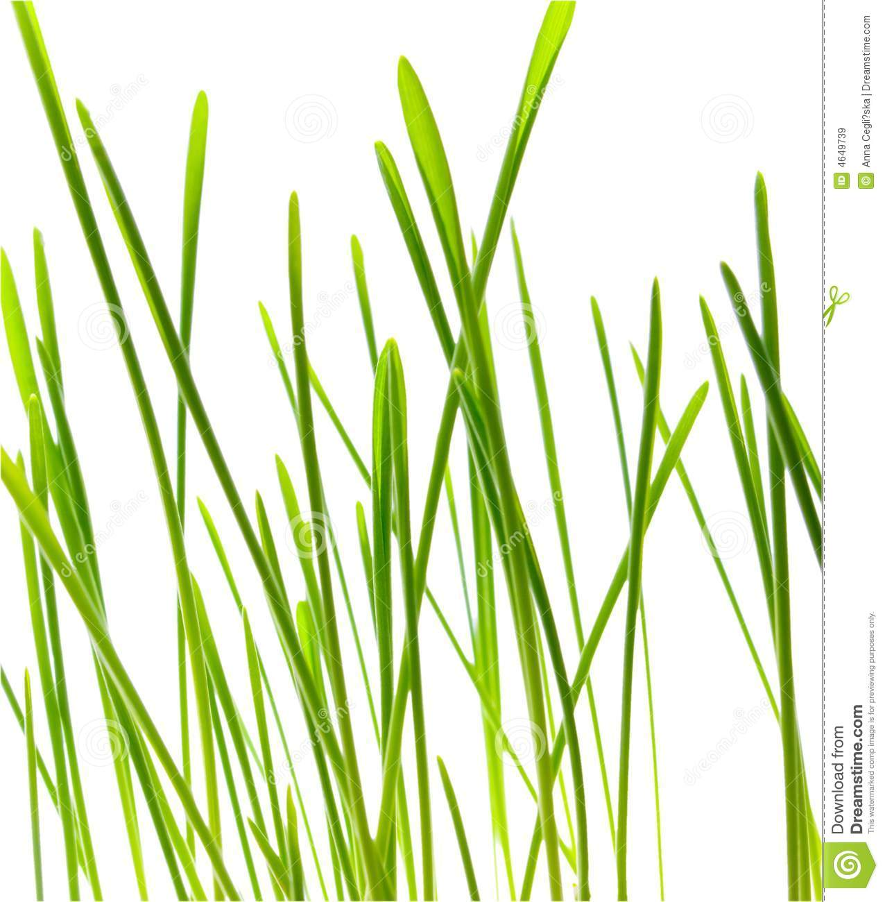 Green Blade Of Grass.