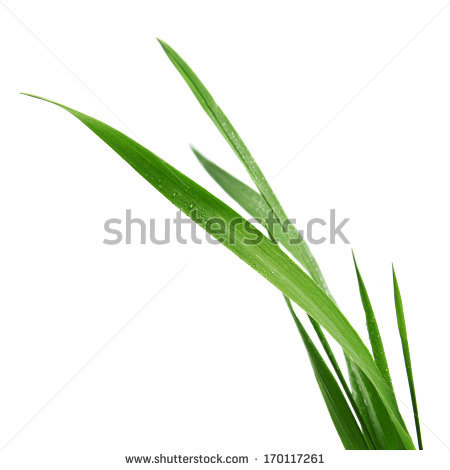Grass Stock Photos, Royalty.