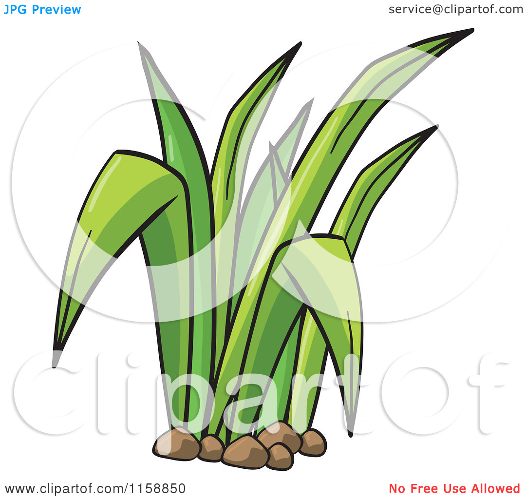 Clipart of a Green Blades of Grass.