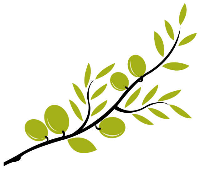 Olive tree branch clipart.