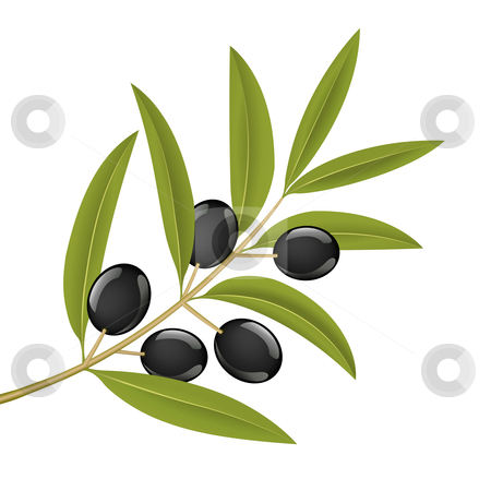 Olive branch stock vector.
