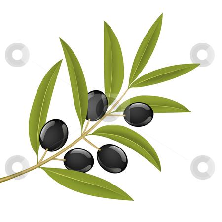Olive branch stock vector.
