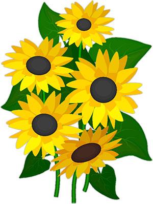 Sun Flowers Clipart