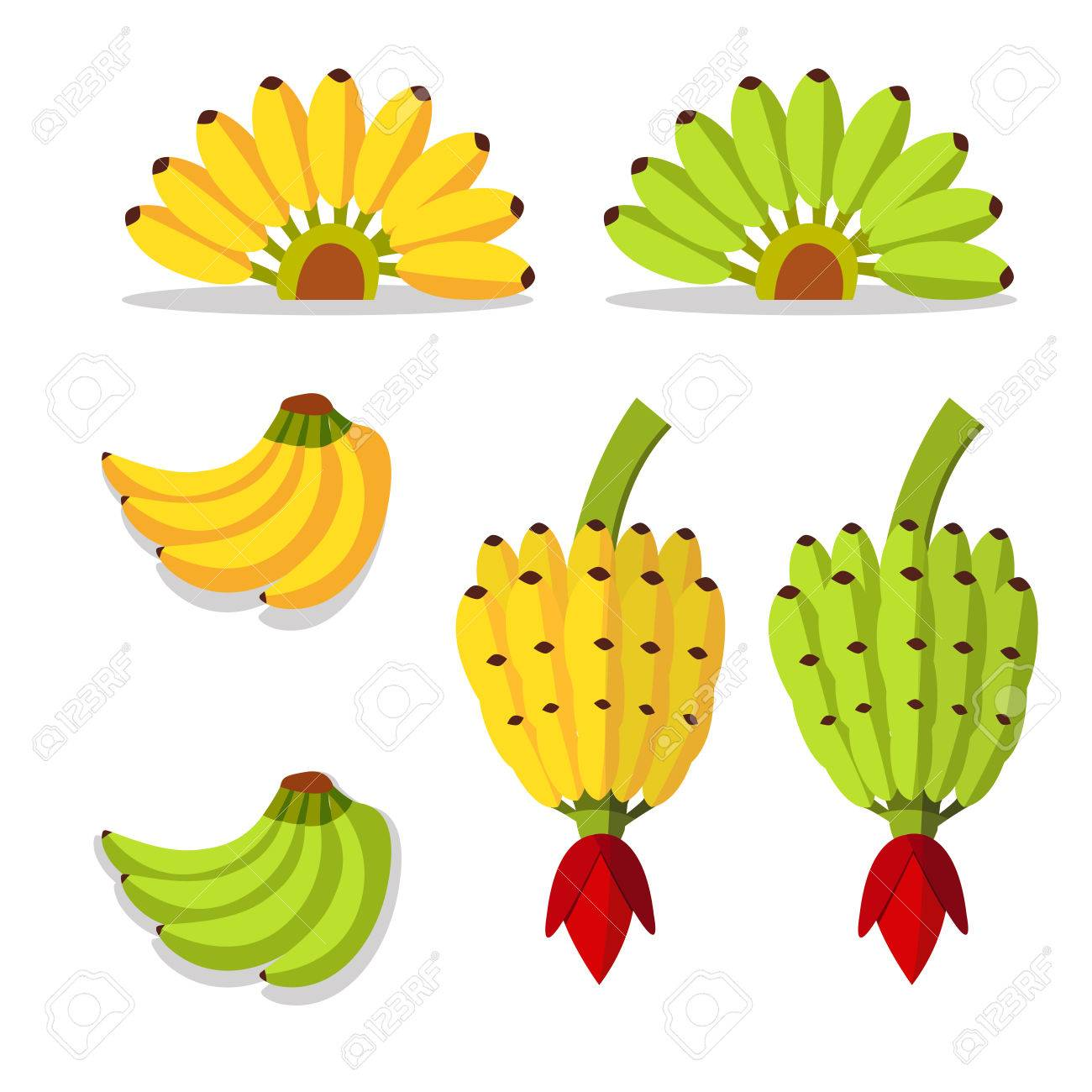 Bunch Of Bananas With Yellow And Green Color Royalty Free Cliparts.