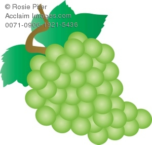 Clip Art Illustration Of A Bunch Of Green Grapes.