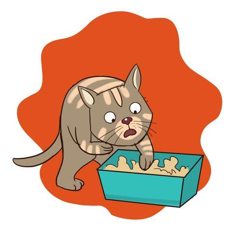 Cat Diarrhea: A Definitive Guide To Treatment.