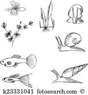 Ceratophyllum Clip Art Illustrations. 3 ceratophyllum clipart EPS.