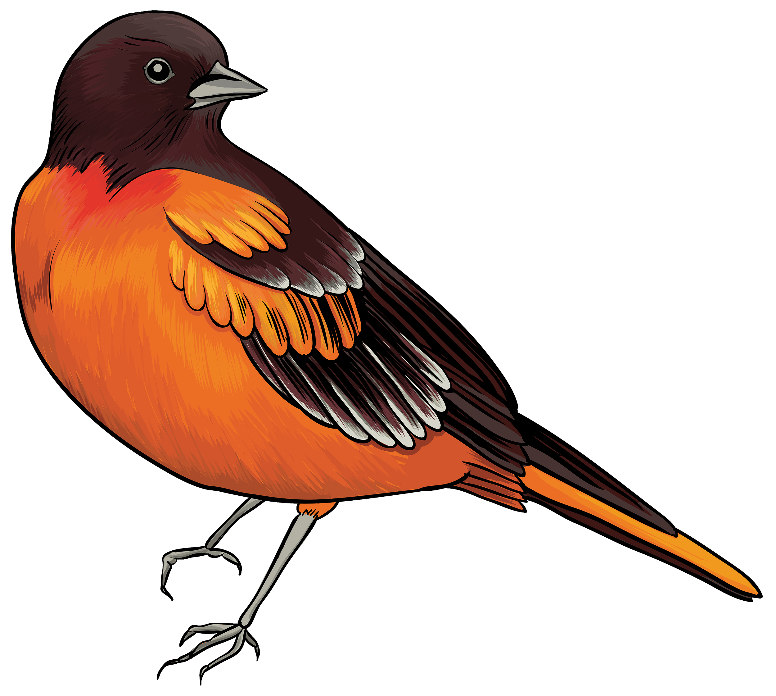 Black and Orange Bird PNG Clipart.