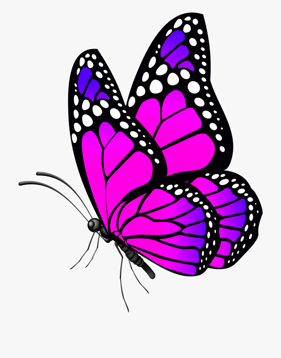 Flowers And Butterflies Clip Art.
