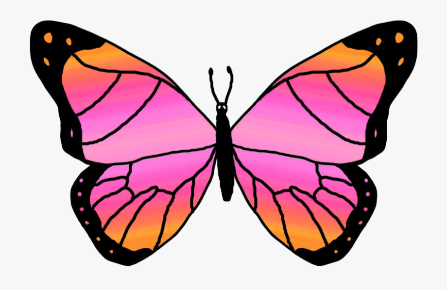 Clipart Butterfly Outline Free Clipart Images.