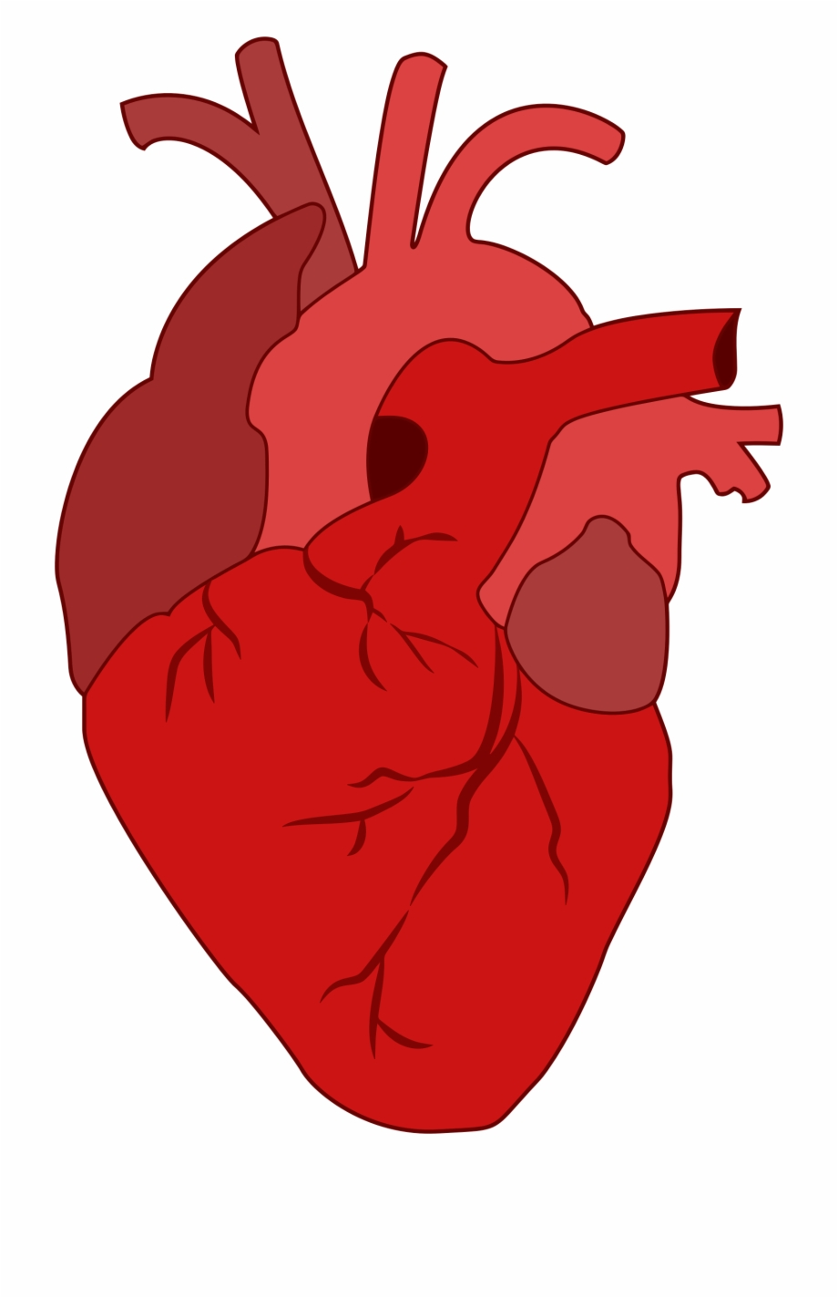Real Heart Clipart.