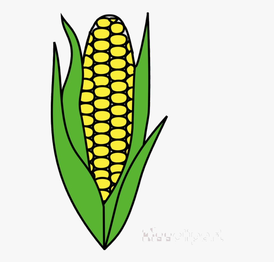 Corn Candy Clipart Cob For Free And Use Images In.