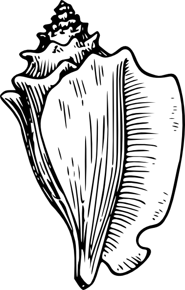 Conch shell clip art clipart images gallery for free.