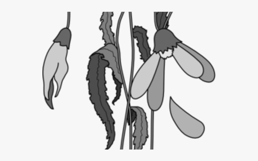 Easy Dead Flowers Drawing , Free Transparent Clipart.