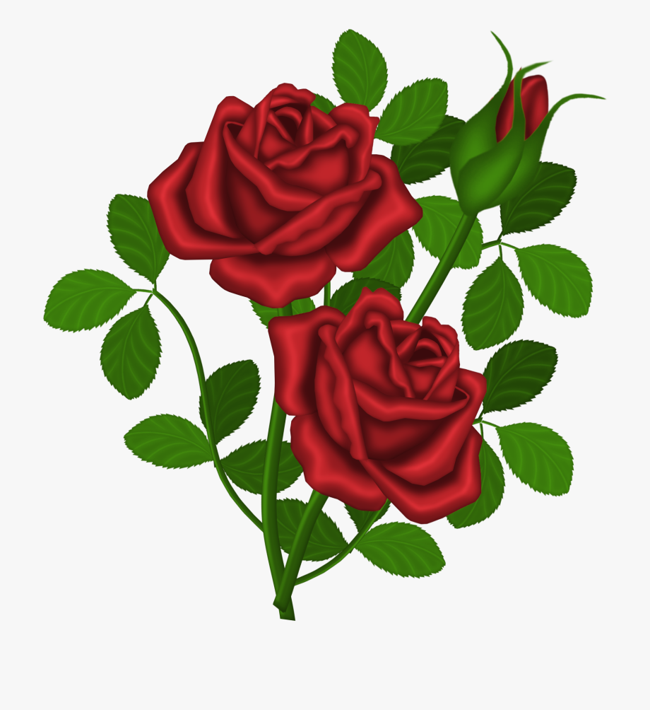 Rose Bush Clipart Dozen Red Roses.