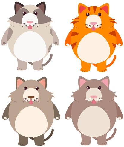 Four fat cats in different color.
