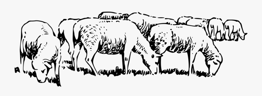 Flock Of Sheep Clipart Black And White , Free Transparent.