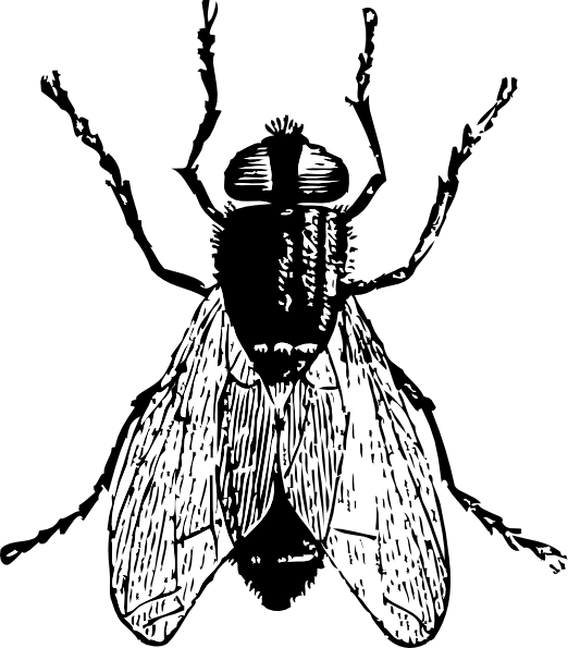 Flies Clipart.