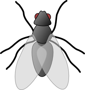 Clipart of a fly.