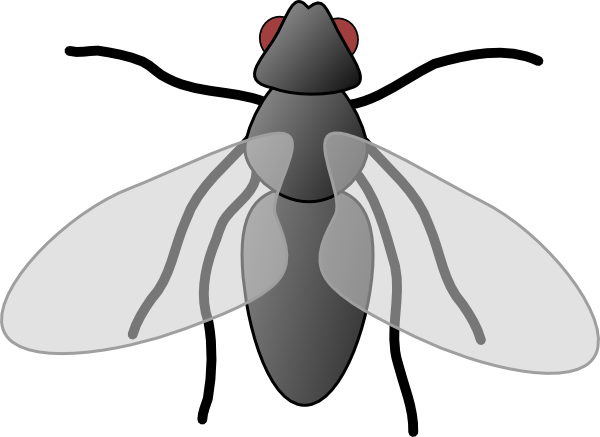 Fly Clip Art & Fly Clip Art Clip Art Images.