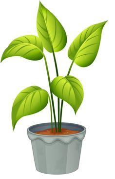 Garden plants clipart #9